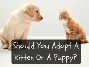 Should You Adopt A Puppy Or A Kitten?