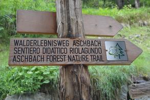 """Sentiero """"avventura"""" nel bosco"""