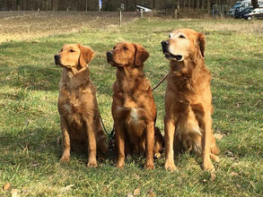 Golden Lining Brisbane, Mama Gundog´s Choice Dynasty und Vater Indian Creek´s Ace of Base