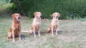 Chase, Zora, Anzou