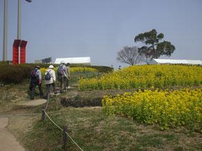 菜の花畑と山ガール