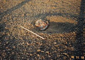 火山弾の写真