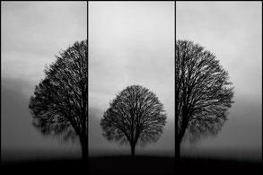 Baum Gespalten Persönlichkeit Trauer