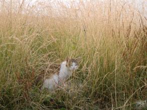牧崎地磯の猫