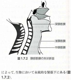 3つの頸筋膜