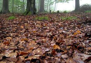 Waldboden- Erde ungeeignet für Hanf Cannabis als Hanferde, Anzuchterde