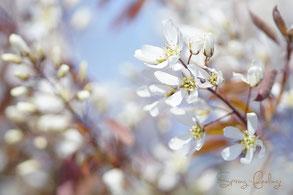 Strahlend weiße Blütenzweige vor blauem Himmel, aufgenommen im Freien an einem sonnigen Frühlingstag