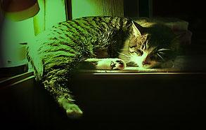 Auch Katzen nehmen die Farbtherapie meist gerne an.