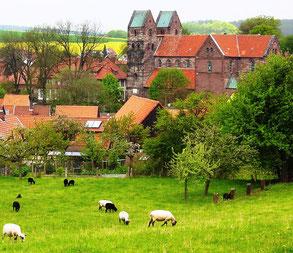 Unsere Schafe in unserer Dorfwiese mit Blick auf die Fredelsloher Kirche