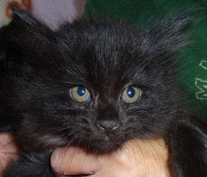 黒 子猫二匹目