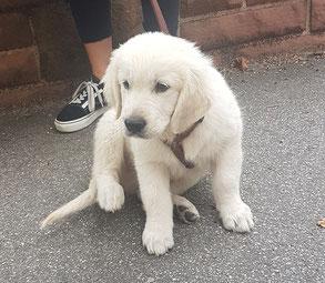Hundesalon oder Hundeschule?