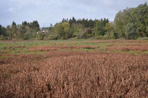 Areal des gewöhnlich mit einer Wasserfläche bedeckten Äbtissensees, Bild: Martin Wölker