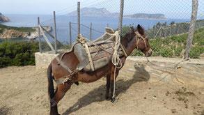 Monasteri-Bucht: Mulis bringen das Baumaterial zum Kloster