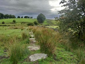 Landschaft im Dartmoor