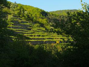die Hügel waren mit grünen Terrassen gestaffelt