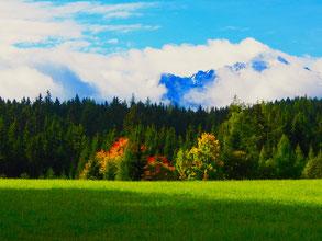farbige Bäume, vor den bereits angeschneiten Bergen