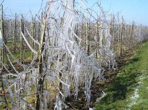 Eis über Obstbaum