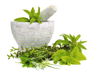 Herbal Beauty Behandlungen von Dr. Schrammek Massage Kosmetik Wellness im ERGOMAR Ergolding Kreis landshut