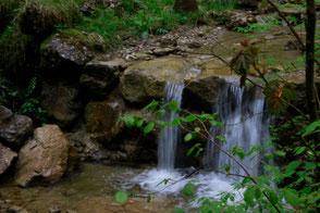Das fließende Wasser eines Wasserfalls