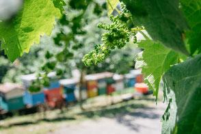 Bresolin ademt Bio! De bijenkasten op de achtergrond huisvesten voorname medewerkers!