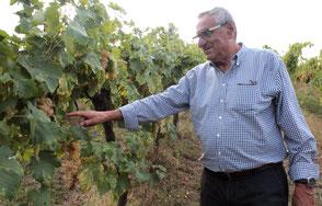 Leonardo Zanchi verheugt zich over de ontwikkeling van de druiven
