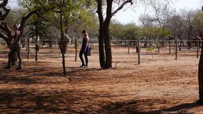 Manege in Zuid-Afrika