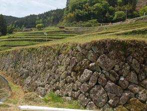 石積みが美しい棚田の中を散策。稲が育てばさらに絵になる