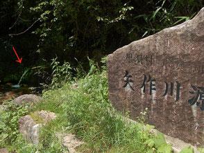 矢作川の源流(矢印)を発見。飲むのは自己責任で