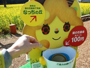 菜の花まつり会場維持のため、100円の募金を