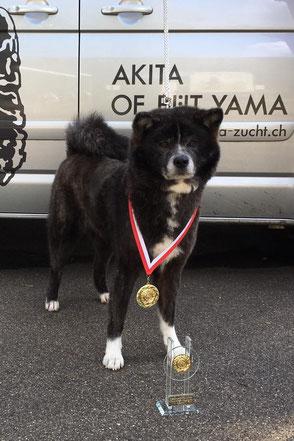 Eimai 1. und 2. Platz Veteran Todtmoos & Clubsiegerschau Akita Club e. V.