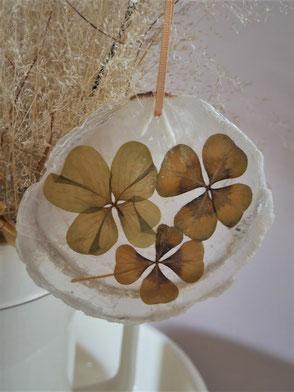 Nacre et trèfle à quatre feuilles : oxalis