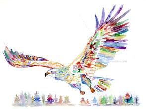 Adler, Illustration, Aquarell, Krafttier, Bayreuth