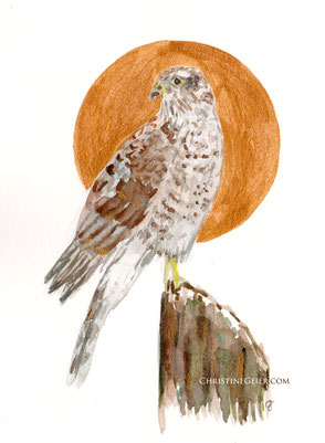 Falke, Sonne, Sonnenvogel, Sperber, Aquarell, Kunst, watercolour