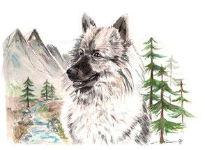 Aquarell, Wald, Norwegen, Wolfshund, Wolfsspitz