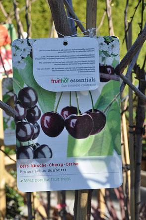 arbre fruitier cerisier