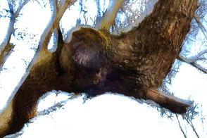 geister Baum