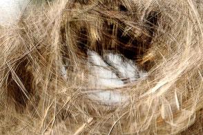 abstraktes Nest
