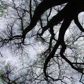 Fotokunst Baum