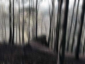 fotokunst Wald