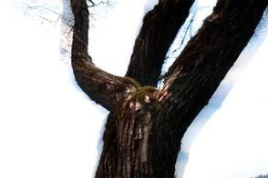 Baum Fotografie