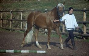 Goumai Körung 1999