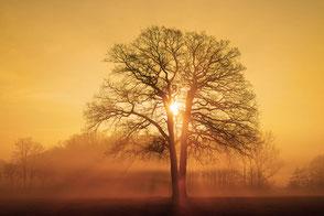 Fotos von Bäumen / Photos of trees