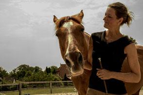 Beritt und Training Pferd, Reitunterricht, Freiarbeit mit dem Pferd