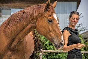 Freie Arbeit mit dem Pferd