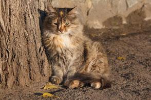 Kleine Katze sitzt verlassen an einer Mauer