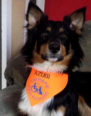 AZUBI , Therapiehund, Begleithund