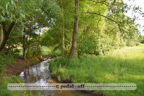 Wasser See Fluss fließend Natur Outdoor Naturfotographie ostpark münchen hachinger bach