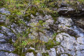 Wald Natur Holz Bäume Pflanzen Birken Eichen Eschen Nadelbäume Pinienbäume