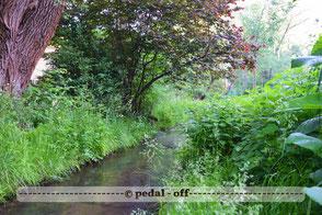 Wasser See Fluss fließend Natur Outdoor Naturfotographie Hachinger Bach München