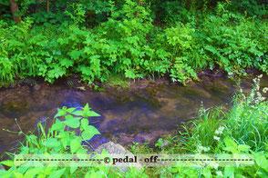 Wasser See Fluss fließend Natur Outdoor Naturfotographie